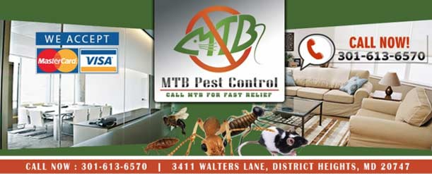 Tips For Pest Control in The Winter